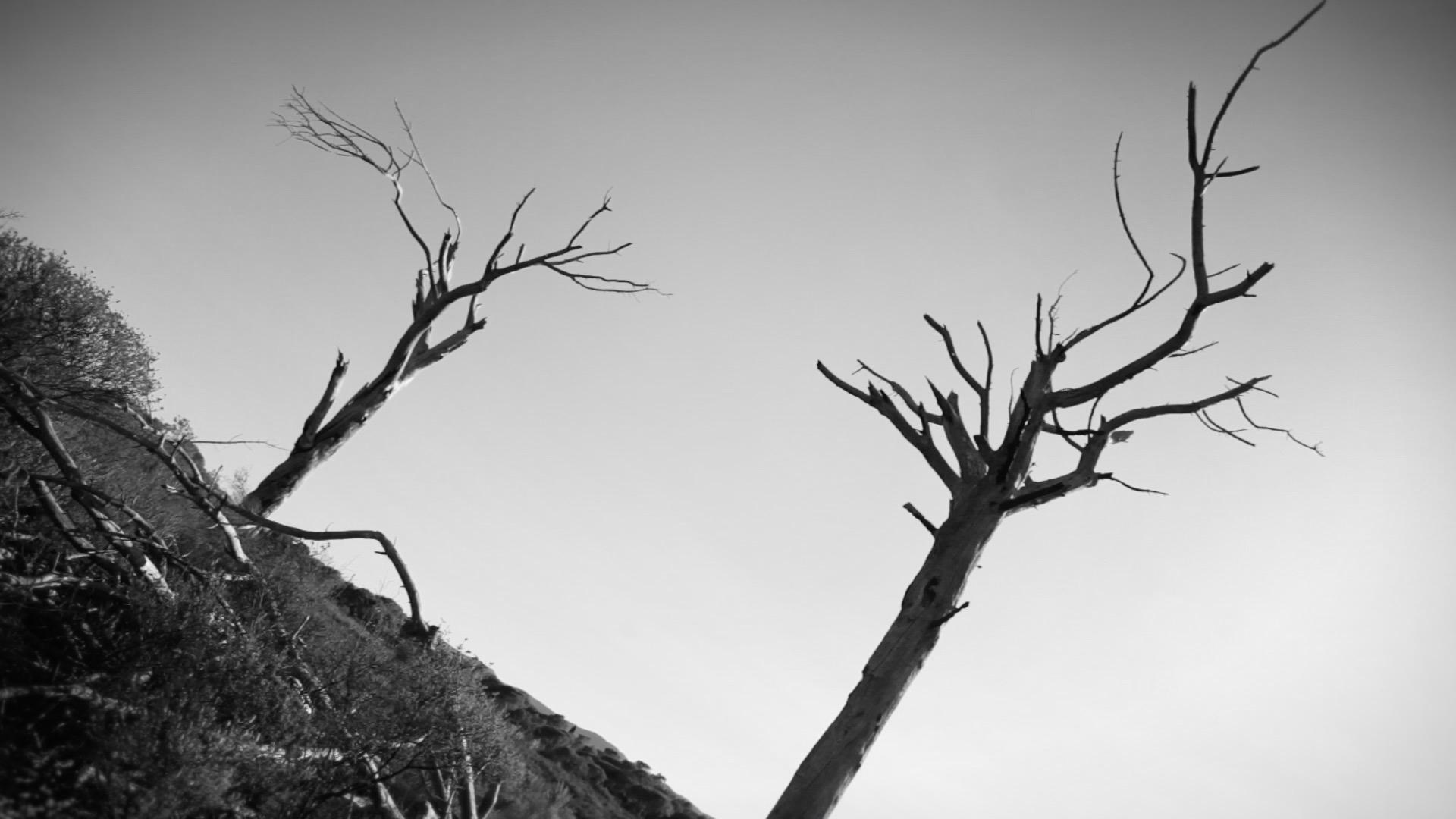 """Arbres mort, arbres brûlés dans le clip de musique et court métrage """" Borderline"""" avec Andrew ancien G-squad – Dead trees, burned trees in music clip and short film"""
