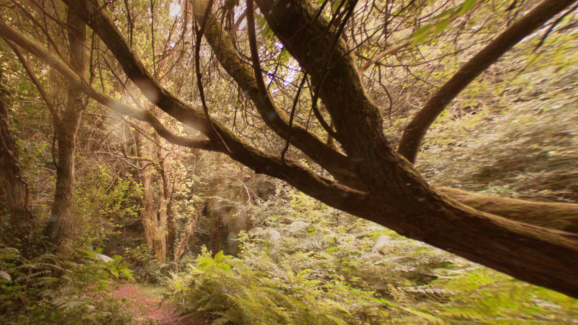 Dark forest – realisateur director animation stop motion – clip -Music video director – Viviane Riberaigua-21